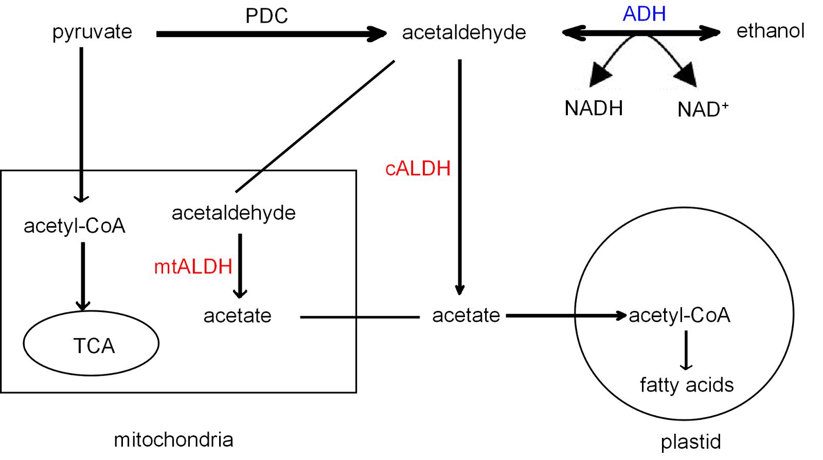 Aldehyde dehydrogenase deficiency asian dating 9