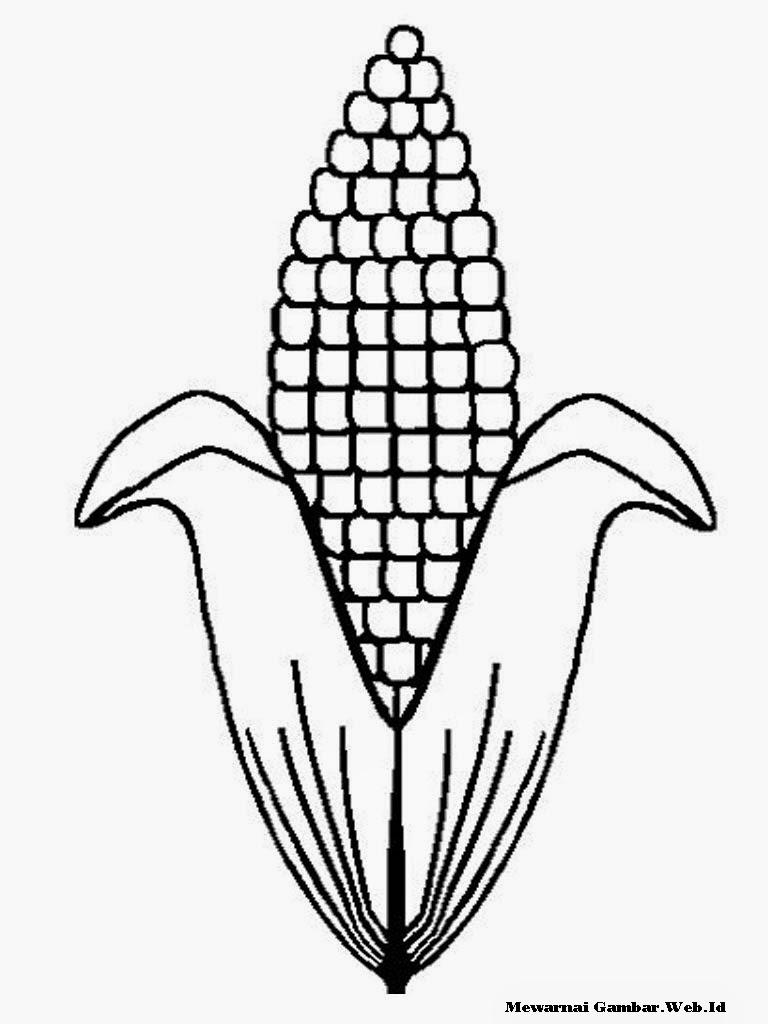 Mewarnai Gambar Sayuran Jagung
