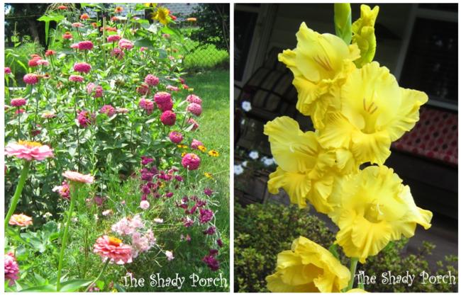 #various #blooms #annuals #perennials #flowers #garden