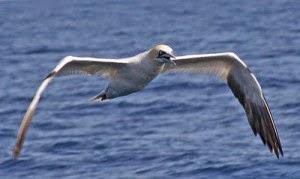 aves marinas, hambruna,