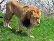 2) : FW Zoo Animals!