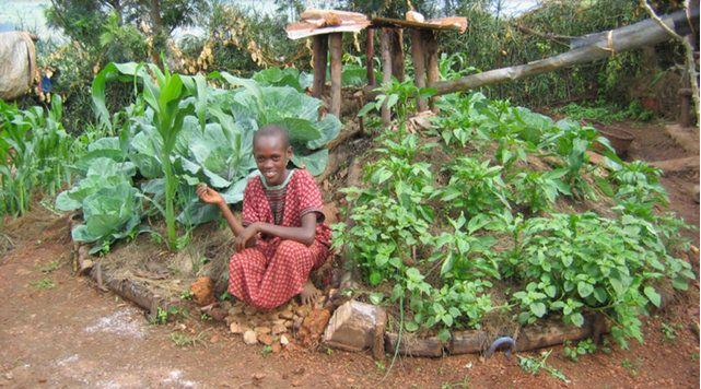 An African Keyhole Garden, Send a Cow