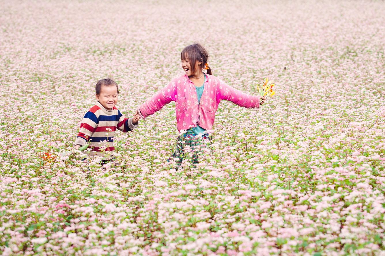 Image result for ha giang purple buckwheat flower season