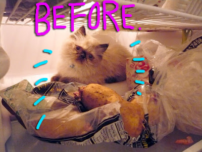 cat-before-after-03