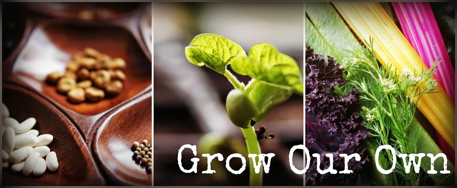 Grow Our Own ~ an allotment blog