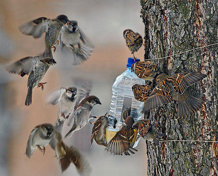 Reciclando todo y mas comedero de aves hecho con - Comedero de pajaros ...