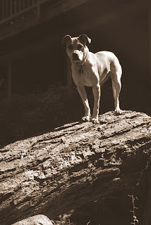 dog on log