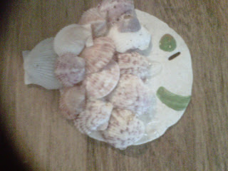 Broken Seashell Crafts http://readyornot-newyear.blogspot.com/2011/07/seashell-craft-ideas.html