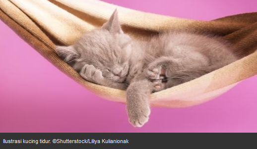 gambar kucing lucu yang sedang tidur