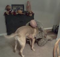 Dog Best Friend