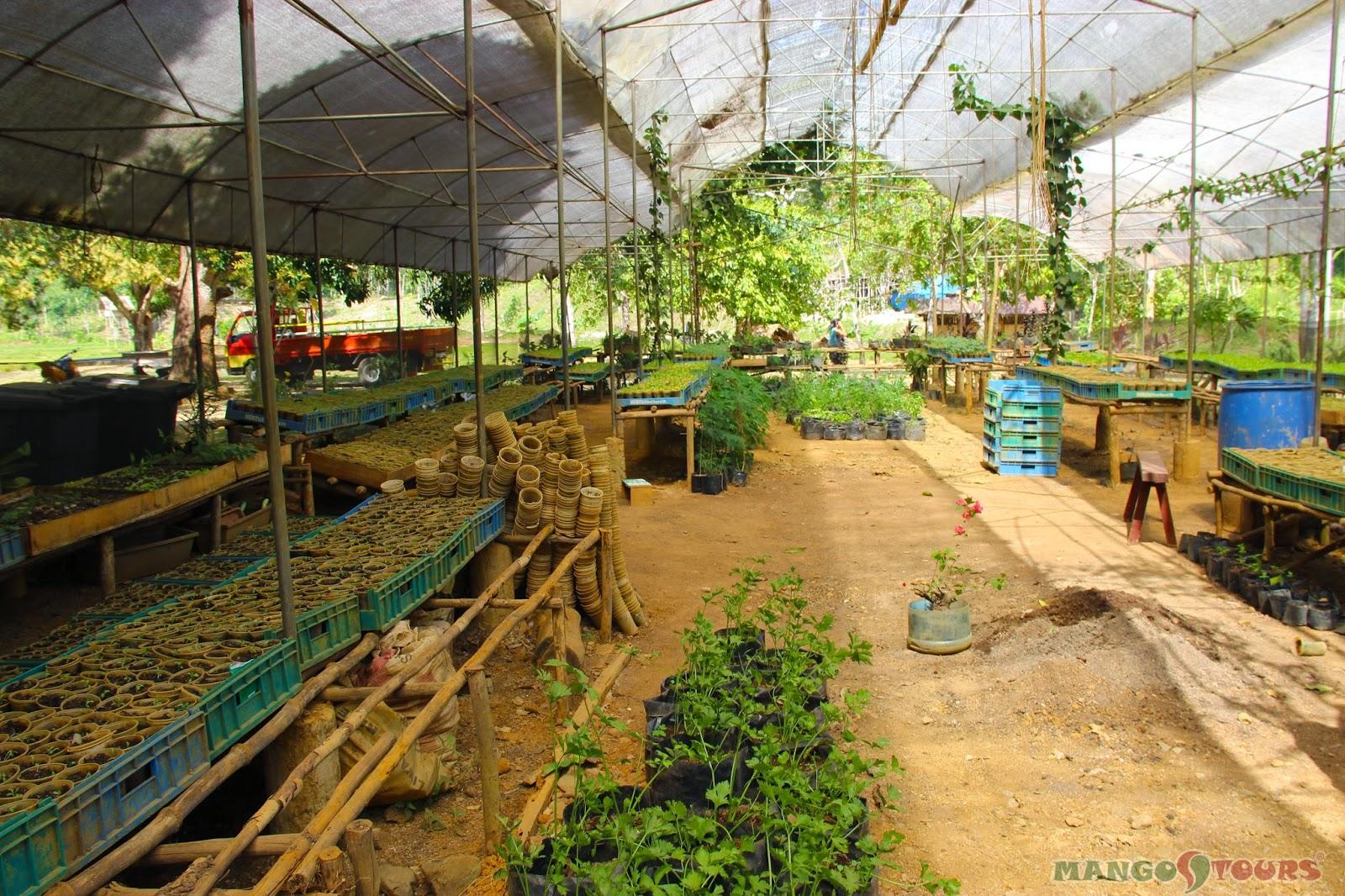 Mango Tours Philippines Sheridan Organic Farm Puerto Princesa Palawan