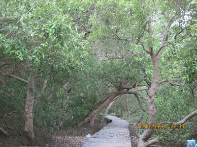 Entering into mangroves of muthuoet