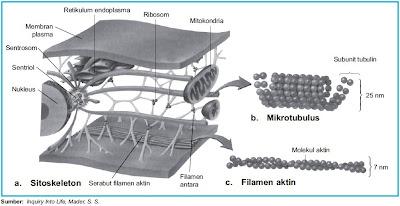 Bagian-bagian sitoskeleton