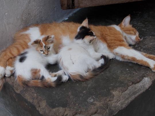 Cats from Stone Town Zanzibar