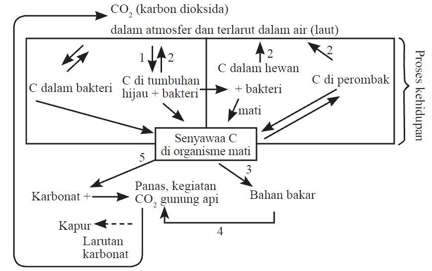 Soal Un Biologi Sma Daur Biogeokimia Download Kumpulan Soal Ujian