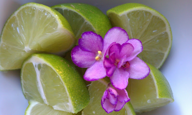 purple african violet flowers