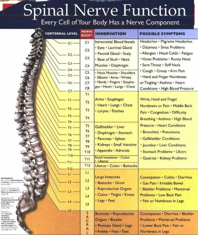 Saúde Preventiva em Harmonia