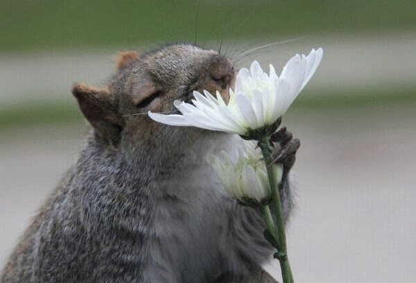Funny animals of the week - 27 December 2013 (40 pics), mouse smells flower