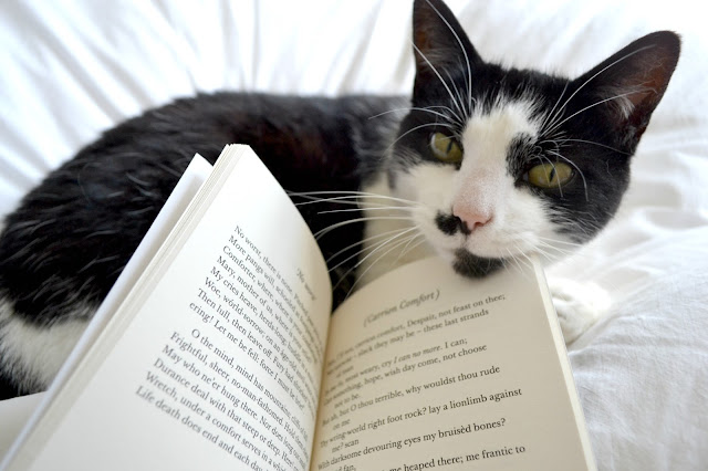Cat with a book
