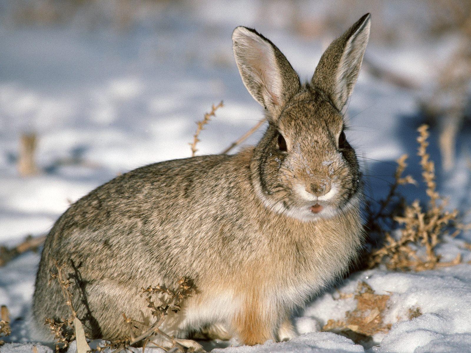 Photos of Bunny Rabbits in Winter