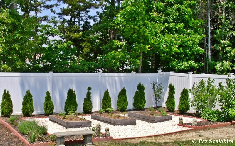 Our raised cedar beds for vegetables   Pet Scribbles