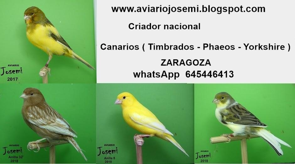 Aviario Josemi      (Zaragoza)