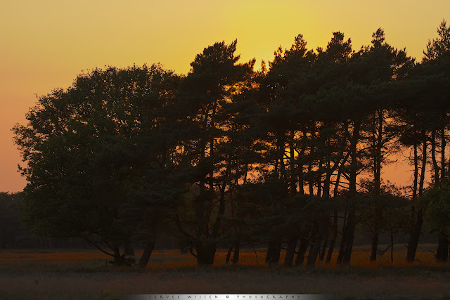 Mooi gouden licht bij zonsondergang - Nice golden light at sunset