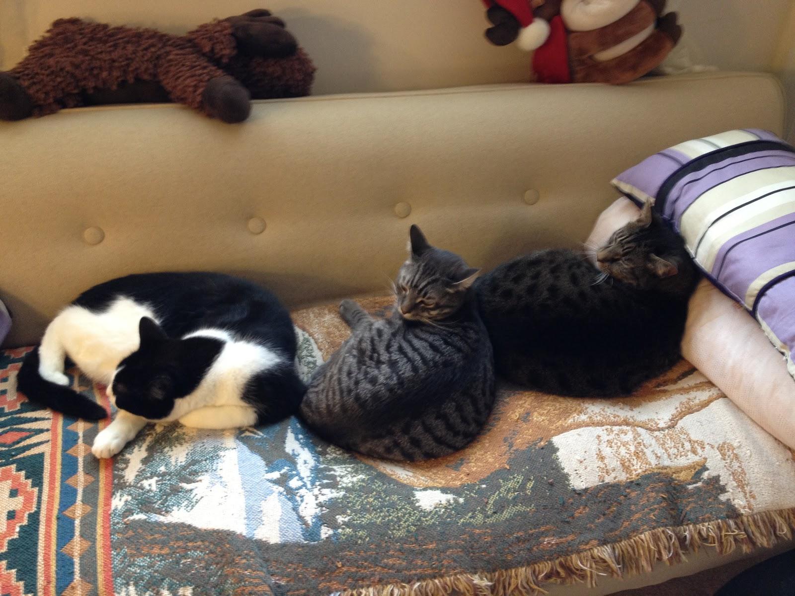 1 марта - всемирный день котов