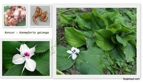 Tanaman obat keluarga (disingkat TOGA) adalah tanaman hasil budidaya rumahan yang berkhasiat sebagai obat