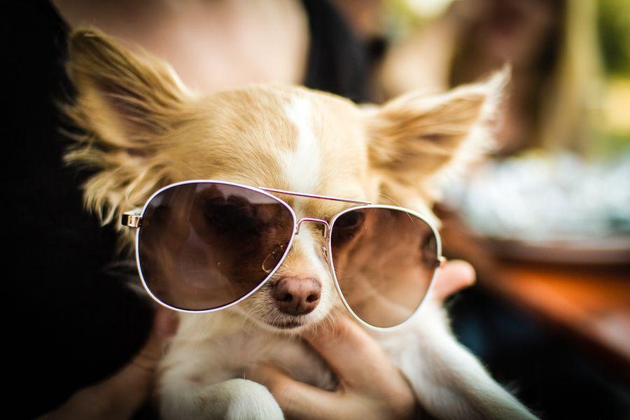 3. I wear my sunglasses at night... by Dominik Gauss