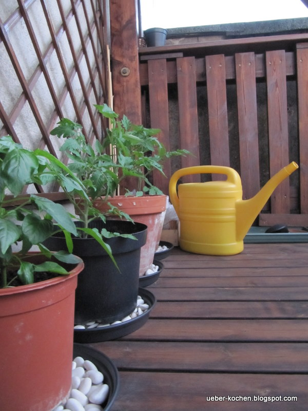 berkochen tomaten auf dem balkon. Black Bedroom Furniture Sets. Home Design Ideas