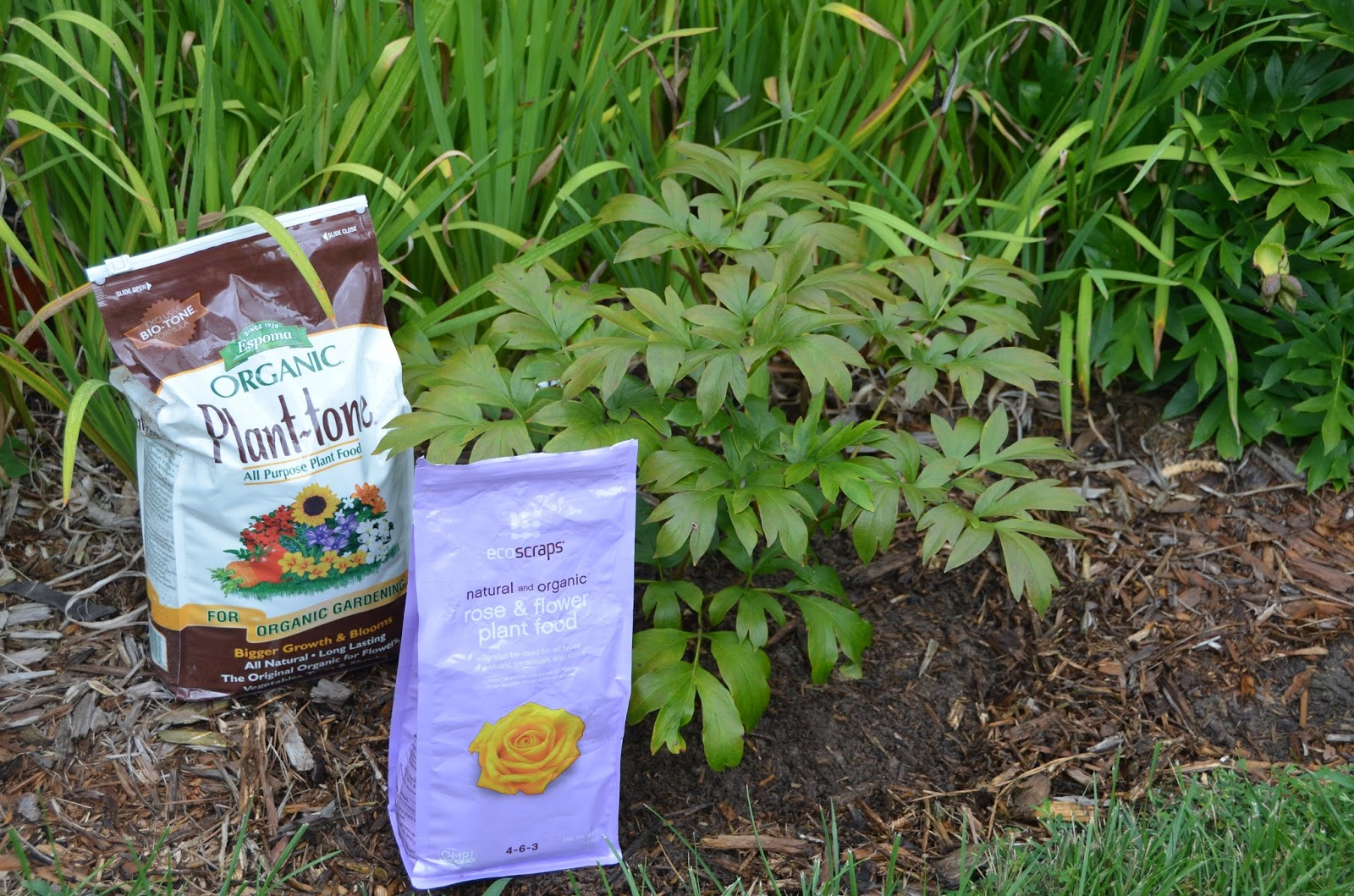 nice how to fertilize Part - 5: nice how to fertilize photo gallery