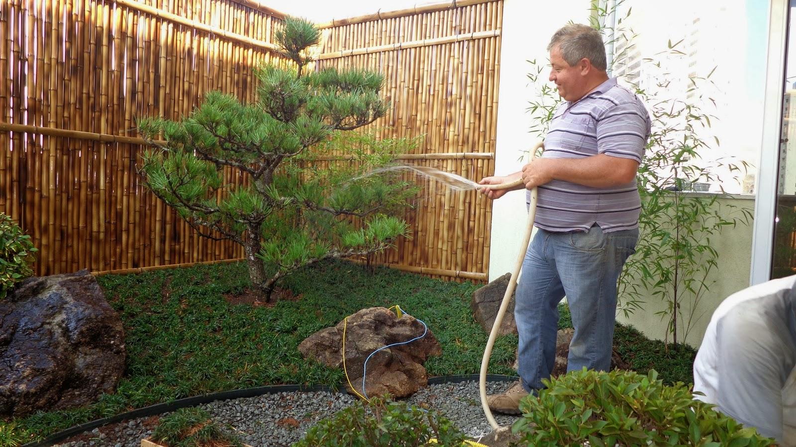 kuromatsu pinheiro negro em jardim japones