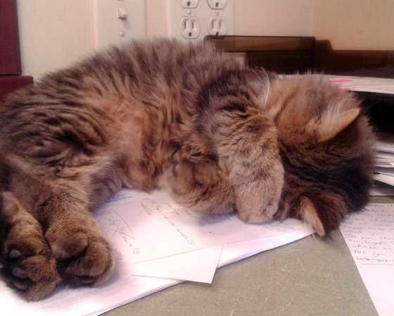 foto kucing kantor 05