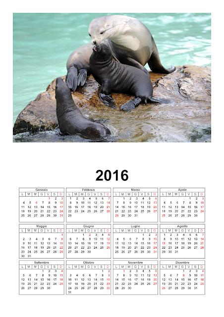 Calendario 2016 - foca