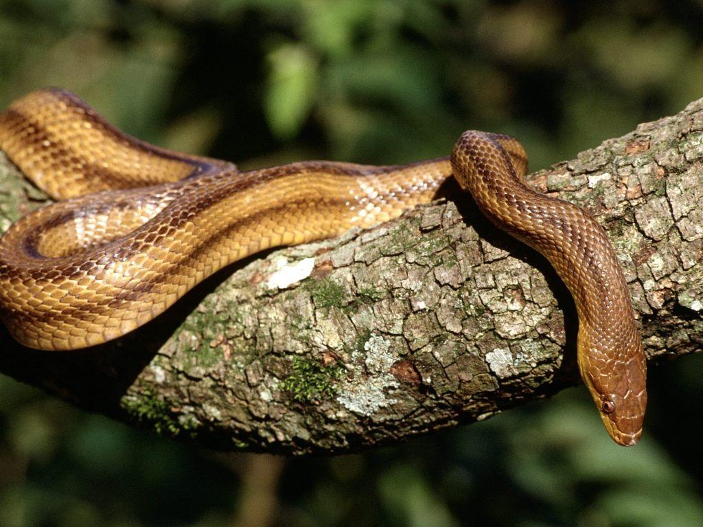 snake - photo #1
