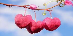 Renungan cinta dalam islam - Ingatlah Remaja Ketika cinta menyapa