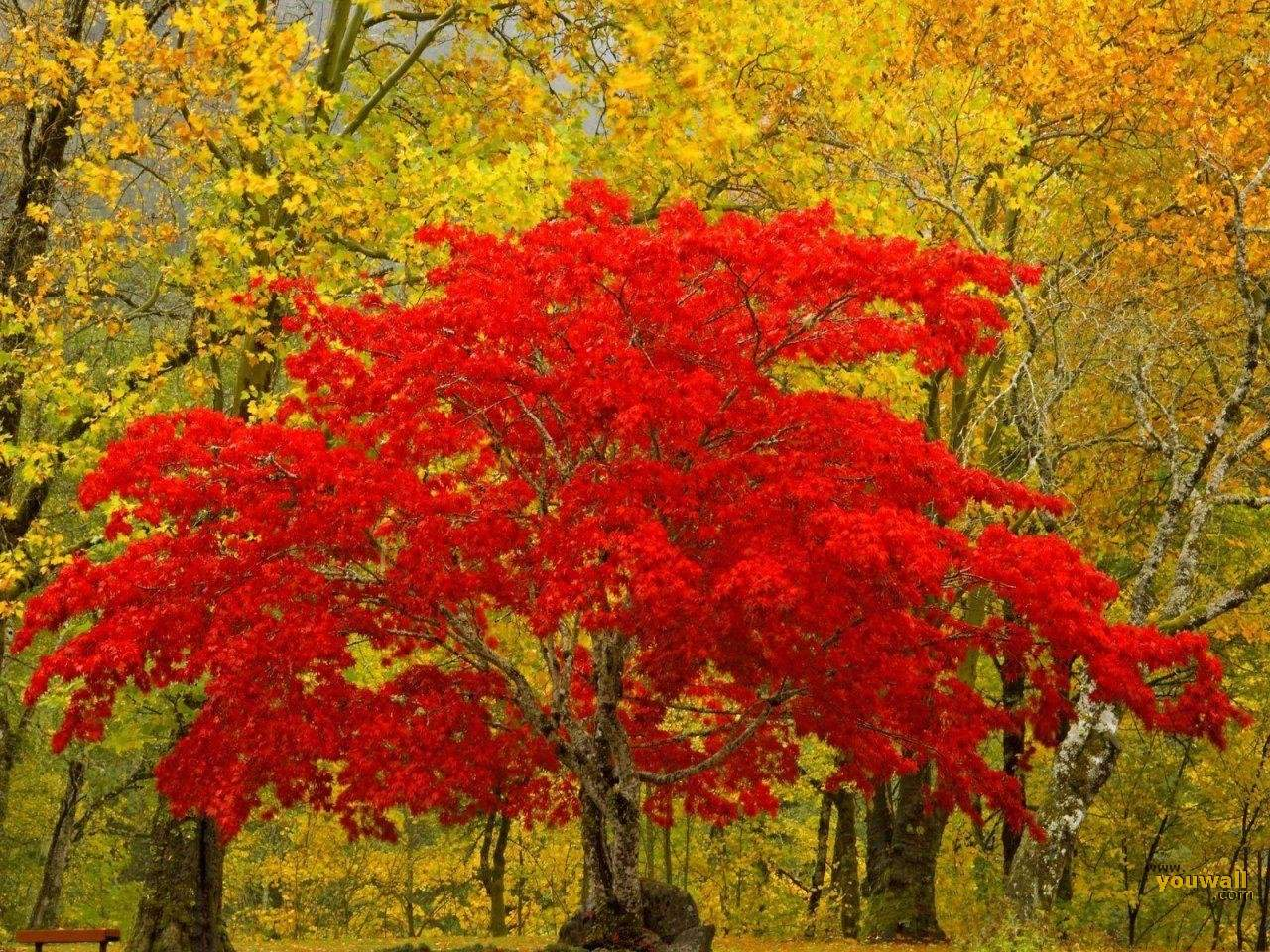 Wallpaper Red Trees | Free Download Wallpaper | DaWallpaperz
