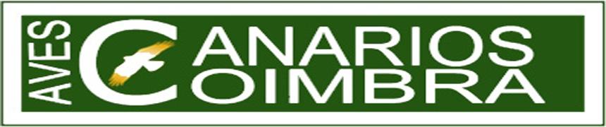 Aves Canários Coimbra