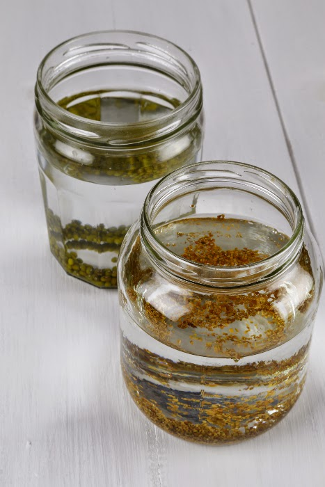 Mung bean and alfalfa seeds soaking in two glass jars