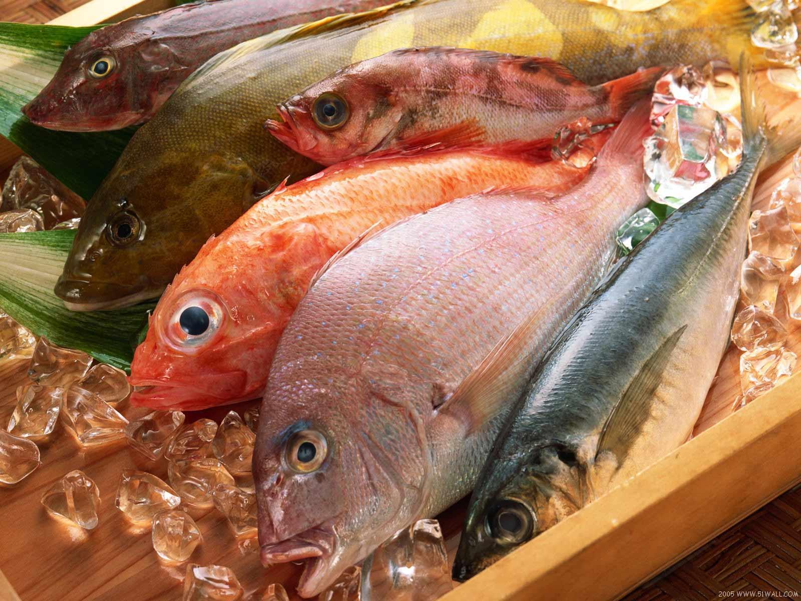 Miau Wantz Her Fillet Storing Fresh Fish