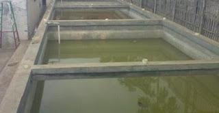 cara budidaya ikan, cara beternak ikan lele di kolam beton,di kolam terpal,kolam terpal pdf,sangkuriang di kolam terpal,sangkuriang di kolam tanah,gurame di kolam terpal dan beton,