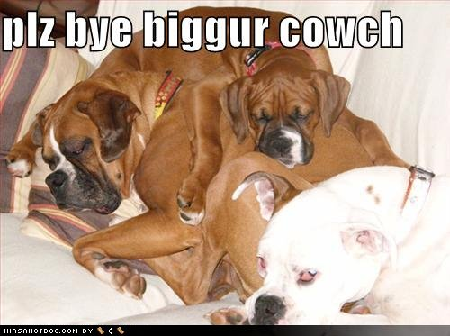 funny-dog-pictures-buy-bigger-couch.jpg