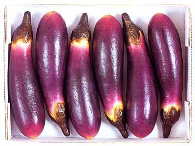 khasiat buah terong
