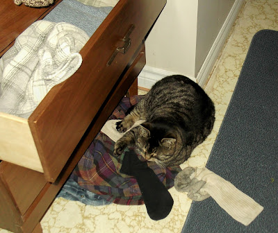 Coon cat snoozes beside dresser cabinet