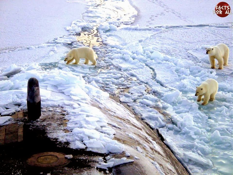 polar bears, submarine