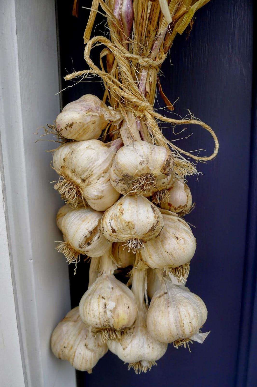 Cured garlic, preserving, urban farming, gardening