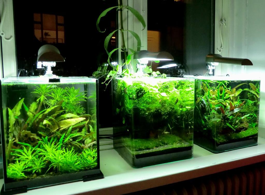 The fishtank shrimpfarm 5 gal fish tank for Good fish for 5 gallon tank