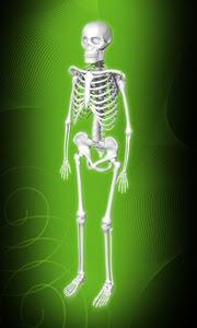 esqueleto-de-ouro