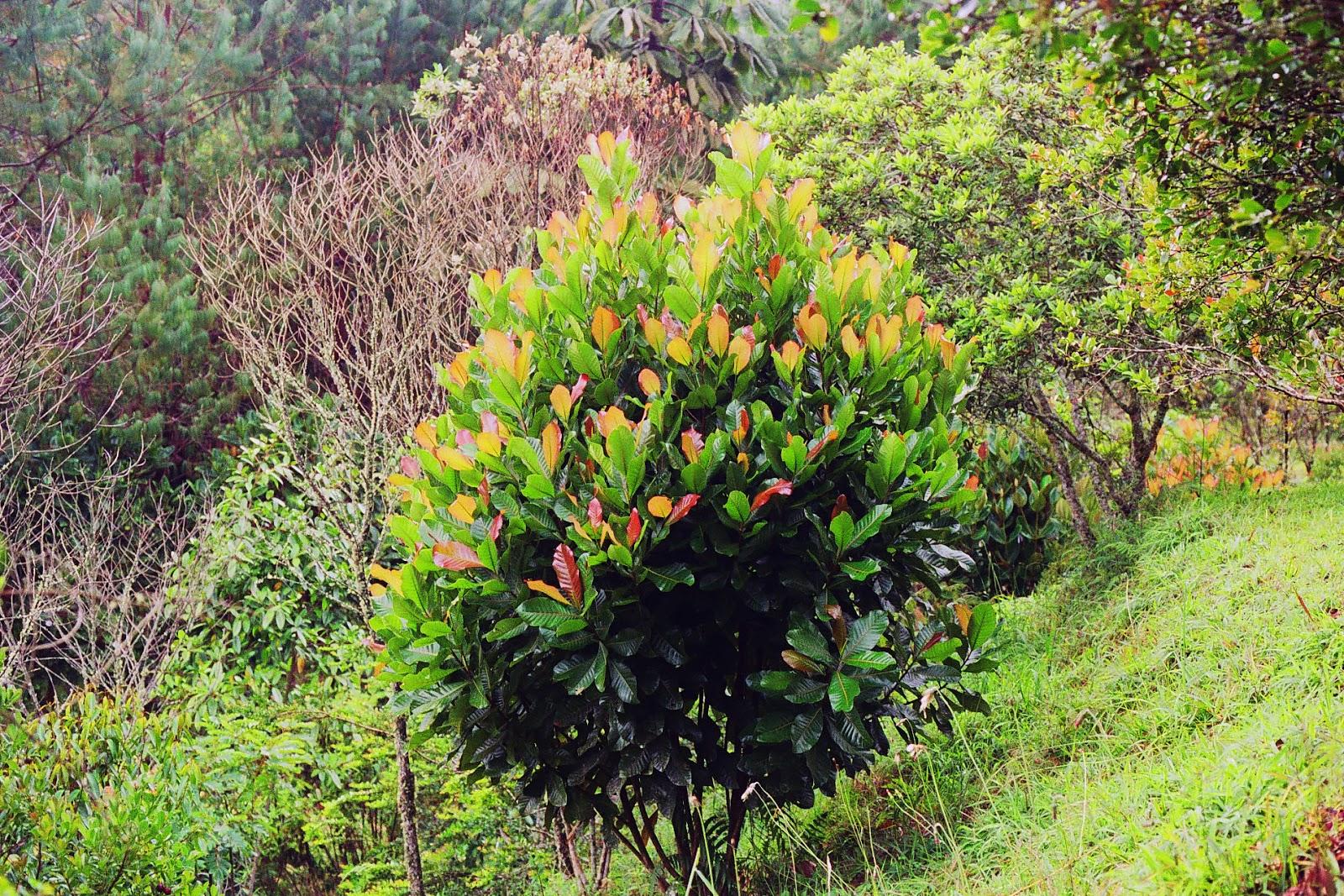 Historia detr s de los rboles el caunce for Caracteristicas de arboles frondosos